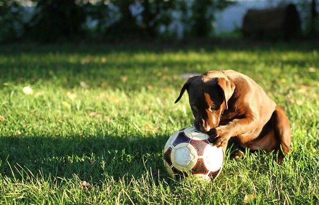 ボールを持たず、キャッチボールの回数を増やす。